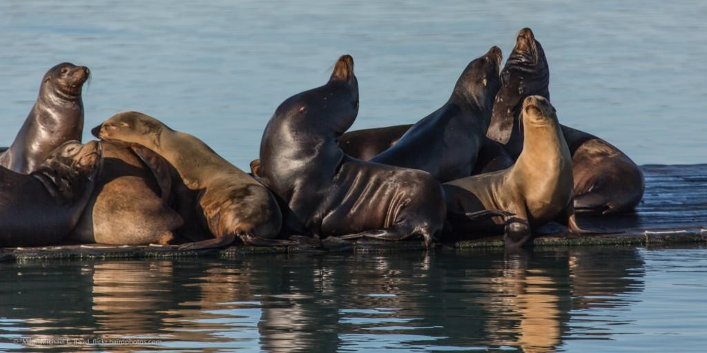 A small Sea Lion Festival, warm and friendly, attributes that MariaDB Server Fest 2021 aims to embrace.